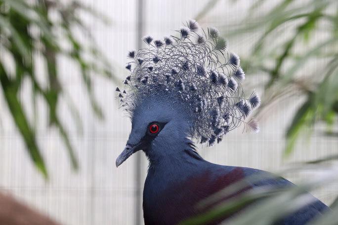 江戸川区自然動物園の動物たち~オウギバトの聖地_b0355317_21381636.jpg