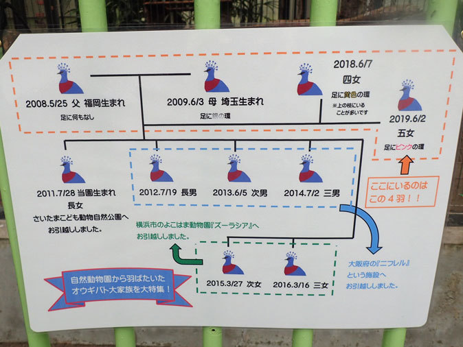 江戸川区自然動物園の動物たち~オウギバトの聖地_b0355317_21391392.jpg