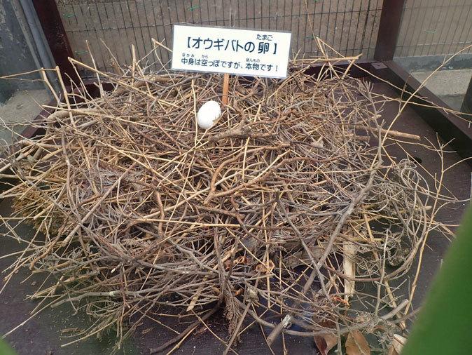 江戸川区自然動物園の動物たち~オウギバトの聖地_b0355317_21411536.jpg