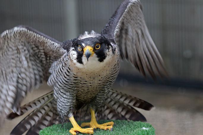 江戸川区自然動物園の動物たち~オウギバトの聖地_b0355317_21442754.jpg