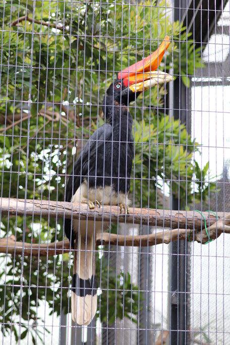 江戸川区自然動物園の動物たち~オウギバトの聖地_b0355317_21472580.jpg