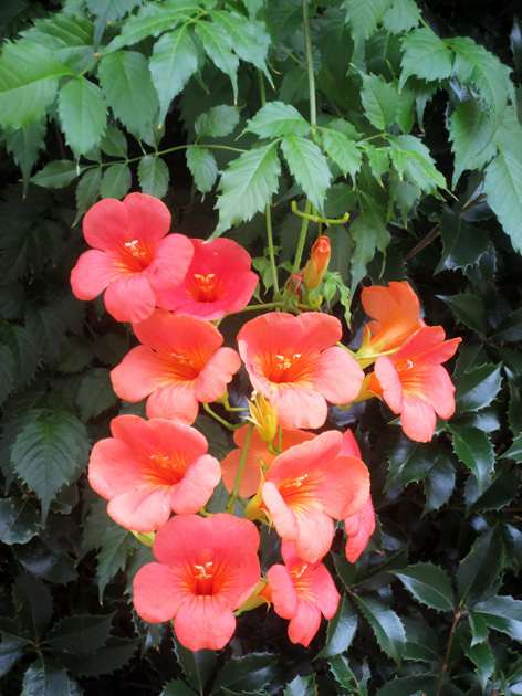 ■惜別の紫陽花、そして週替わりの夕暮れ[7/5]_d0190217_21362589.jpg