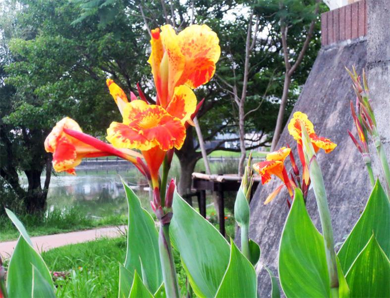 ■惜別の紫陽花、そして週替わりの夕暮れ[7/5]_d0190217_21371071.jpg