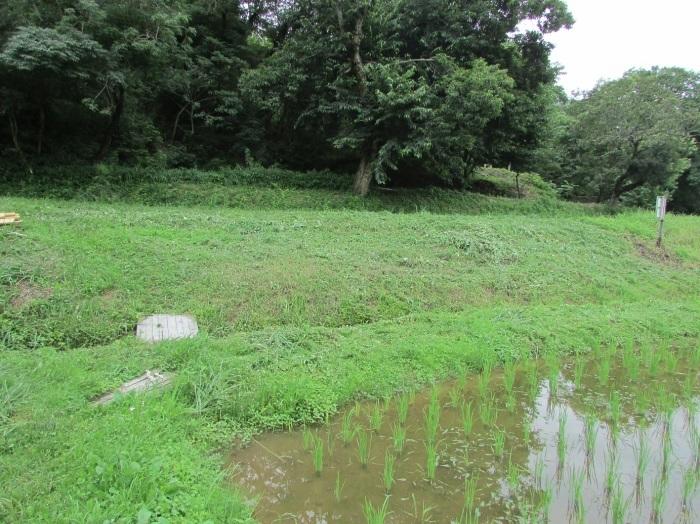 草刈り、栗苗植樹_b0175921_18383181.jpg