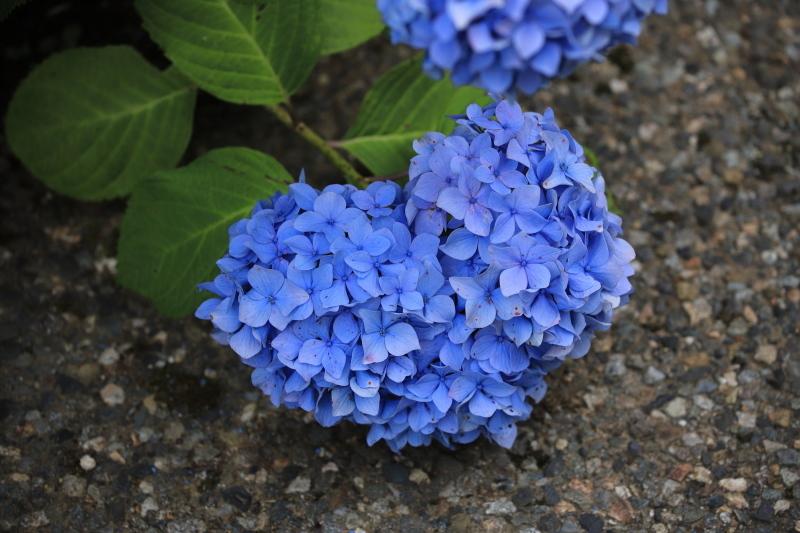 Blue Heart_e0169421_21343122.jpg
