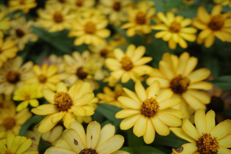 あじさい鮮やか 長居植物園_f0209122_10174841.jpg