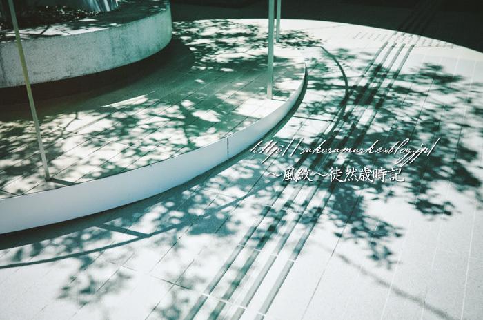 初夏の影。_f0235723_20274604.jpg