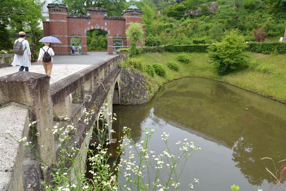 天童眼鏡橋とヒメジュオン_e0373930_21054800.jpg
