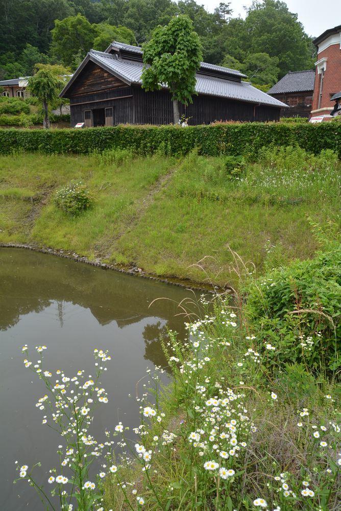 天童眼鏡橋とヒメジュオン_e0373930_21054833.jpg