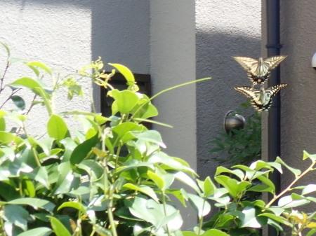 2020年6月上旬~7月上旬 埼玉県北部 拙宅の虫たち_c0353632_11044543.jpg