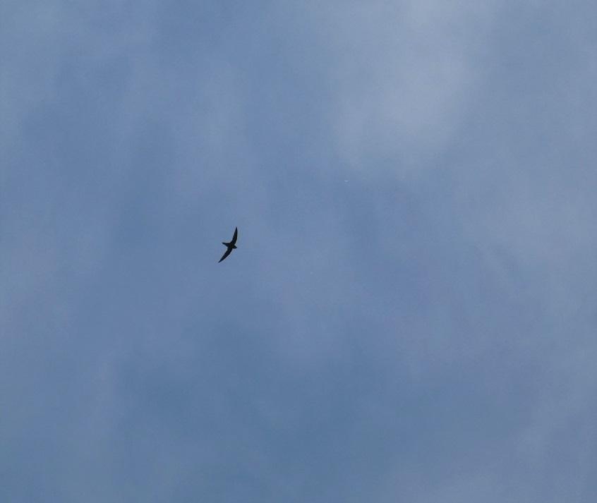ずーっと飛んでる。。。_a0114742_11183950.jpg