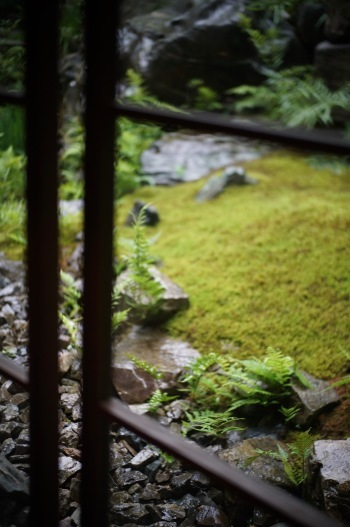 moss, fern and agapanthus...._f0057849_17284605.jpg