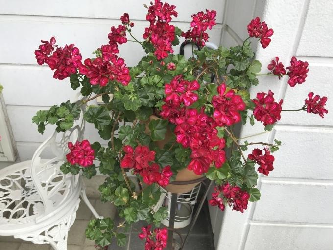 今日のお庭_f0303858_10260171.jpeg