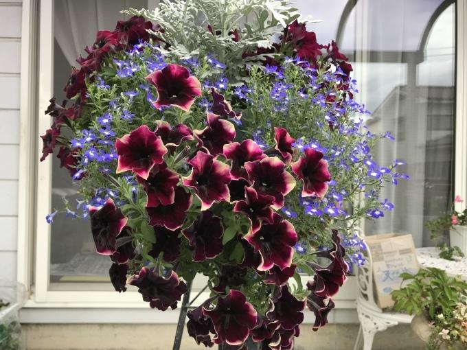 今日のお庭_f0303858_10261815.jpeg