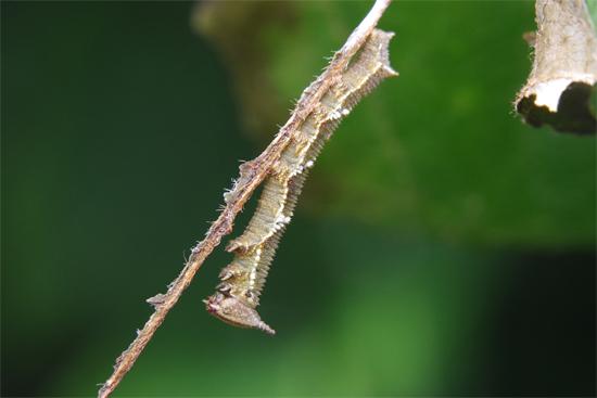 幼虫探しの日_e0167571_22281053.jpg