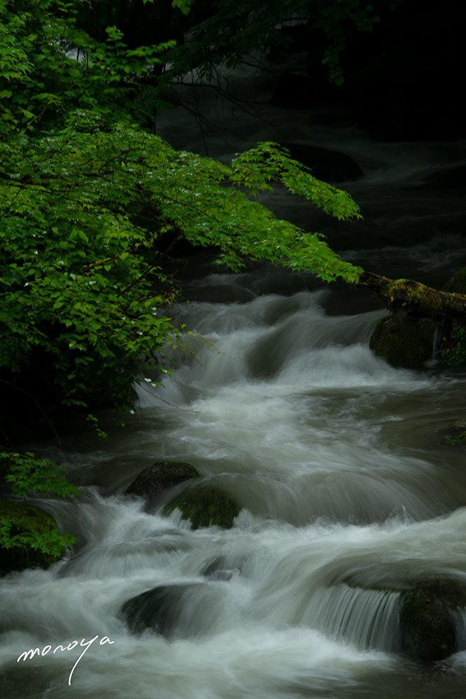 雨の渓流_c0085877_05282064.jpg