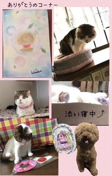 警官ななととちゃん 傘トラ猫ちゃん_f0375804_08391819.jpg