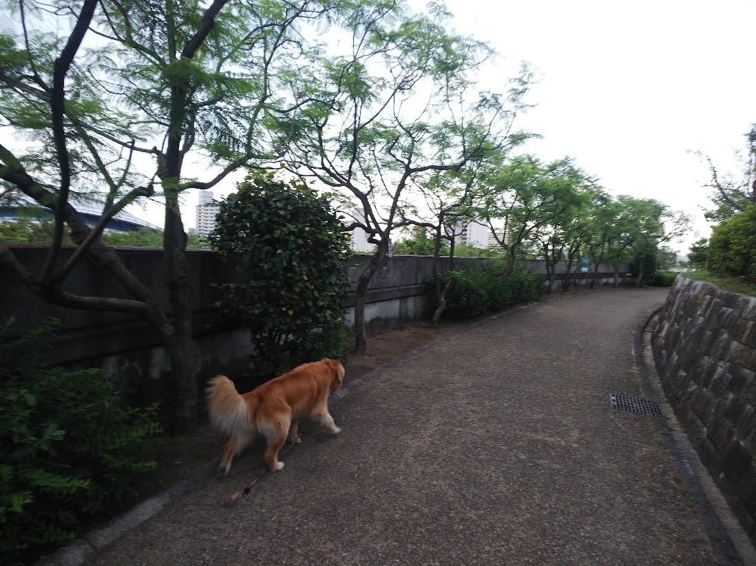 花_a0098418_10353772.jpg