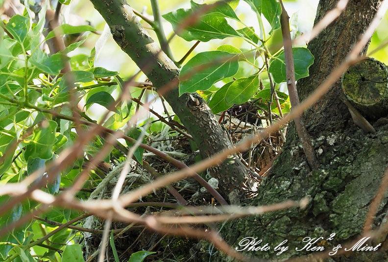 オナカの雛が産まれました♪_e0218518_21543195.jpg