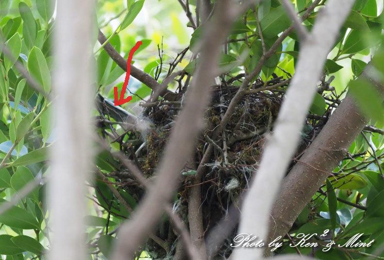 オナカの雛が産まれました♪_e0218518_21552439.jpg