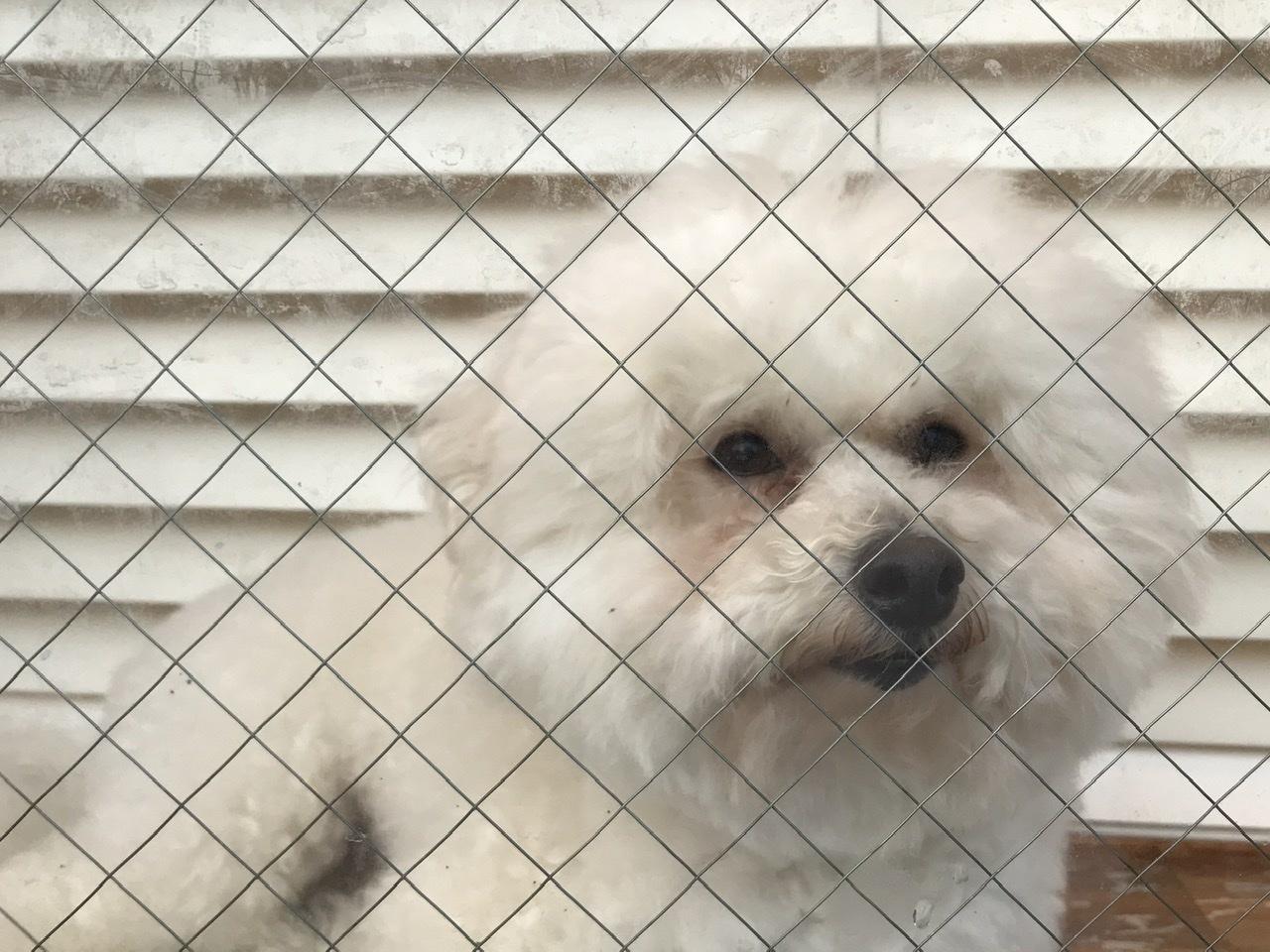 7月5日 番犬Ginger_a0317236_07294209.jpeg