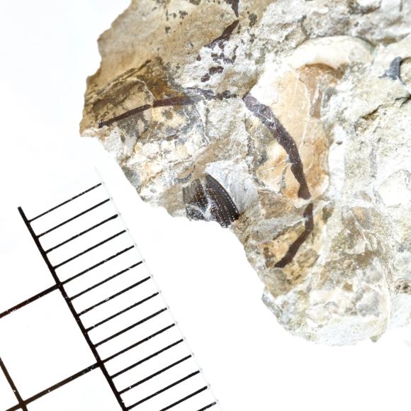 再発見?白亜紀・昆虫化石_e0290546_14353273.jpg