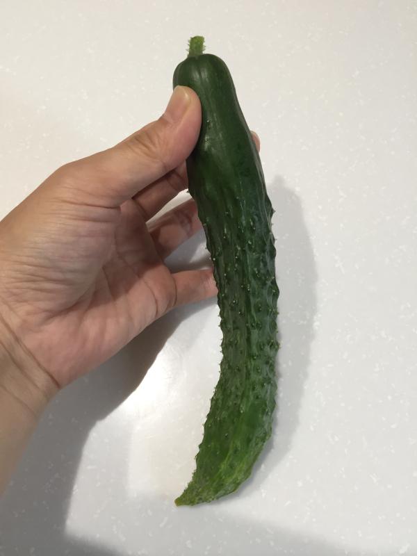 初めて収穫したキュウリ☆_f0183846_07374977.jpg
