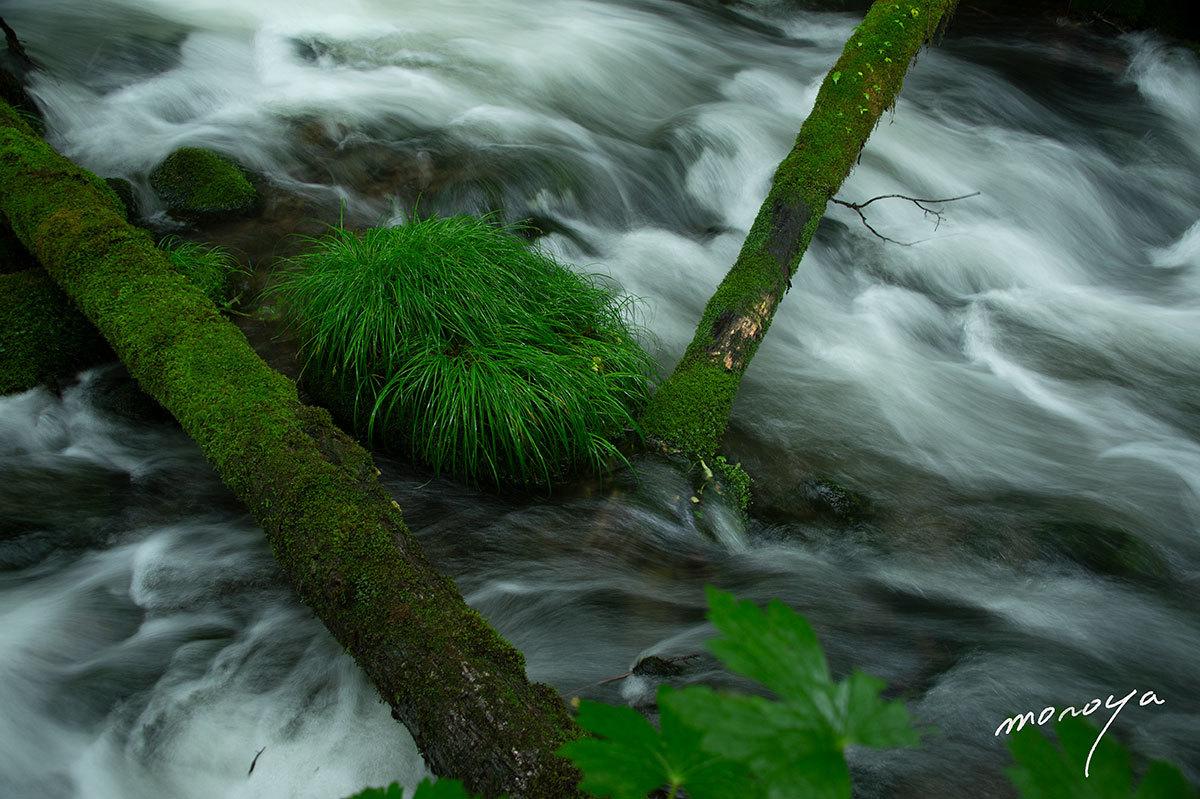 雨の渓流2_c0085877_06114544.jpg