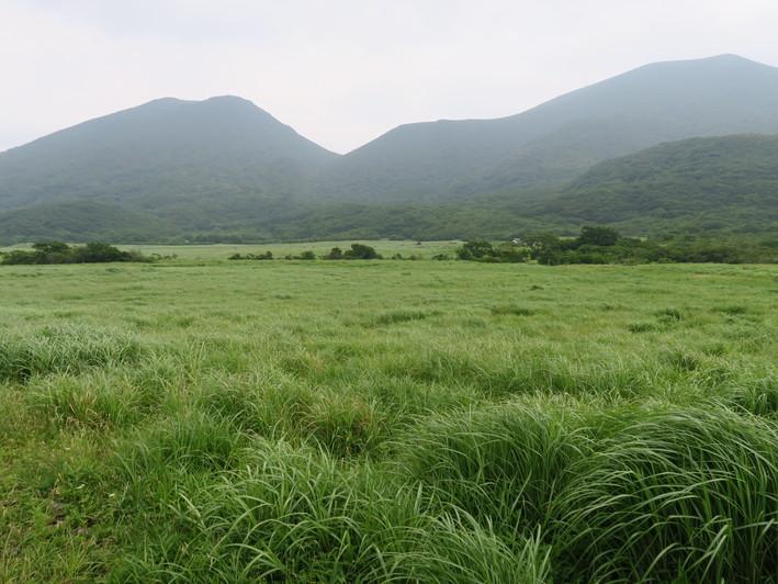 三俣山山麓を周回 2020.07.05(日)_a0166196_1493665.jpg