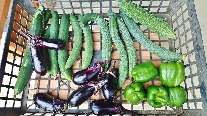 兼業農家の家庭菜園を覗いてみました_c0336902_18060012.jpg