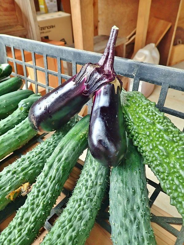 兼業農家の家庭菜園を覗いてみました_c0336902_18060485.jpg