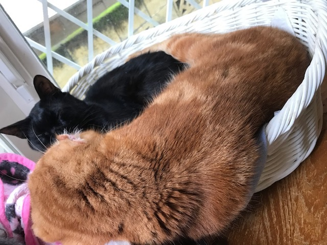 のん太くん、猫の輪の中に♪_f0242002_20170644.jpg