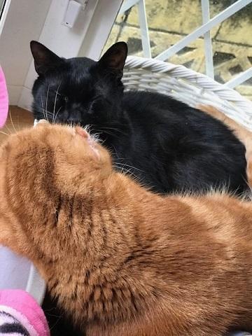 のん太くん、猫の輪の中に♪_f0242002_20172057.jpg
