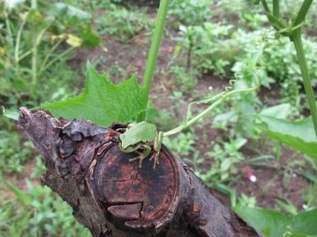 花と蛙と蟷螂_a0203003_09445750.jpg