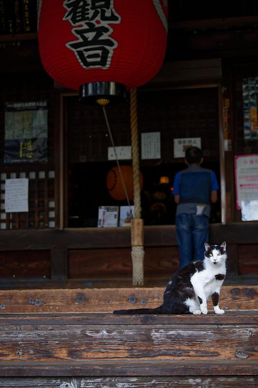 町角ニャンコ・行願寺のニャンコ_f0032011_18261489.jpg
