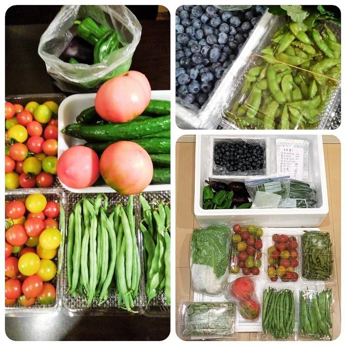 ■菜園野菜を送りました。【コロナ騒動で来れない娘夫婦に/ブルーベリー狩り】_b0033423_20593913.jpg