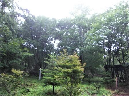 企業の森活動日記 サーラエナジー㈱ サーラの森_d0105723_18503882.jpg