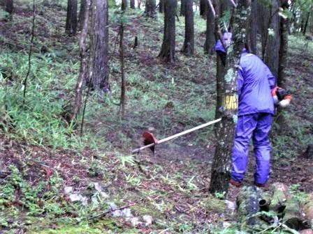 企業の森活動日記 サーラエナジー㈱ サーラの森_d0105723_18510235.jpg
