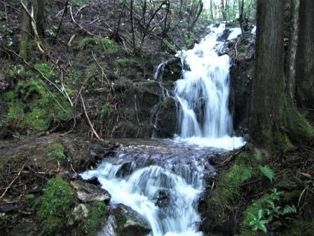 企業の森活動日記 サーラエナジー㈱ サーラの森_d0105723_18513047.jpg