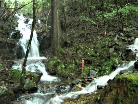 企業の森活動日記 サーラエナジー㈱ サーラの森_d0105723_18513999.jpg