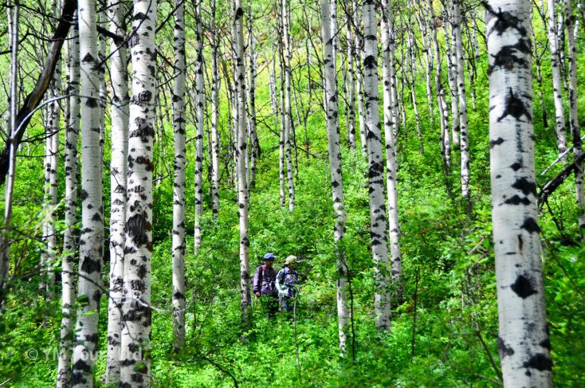シーズンを通して楽しめる3つのベスト・ハイキングコース_d0112928_06475341.jpg