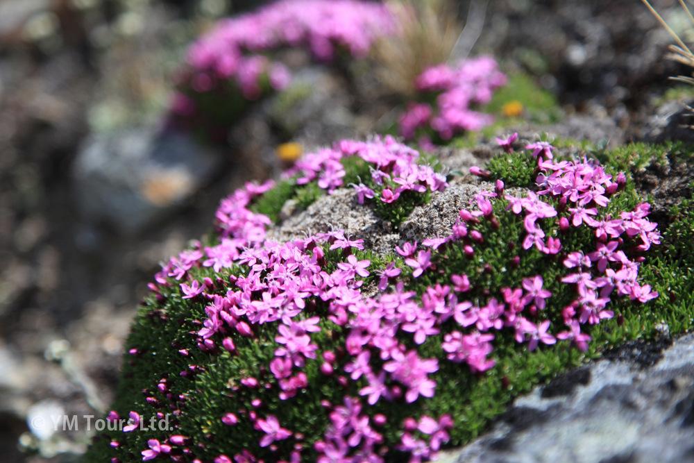 シーズンを通して楽しめる3つのベスト・ハイキングコース_d0112928_07184498.jpg