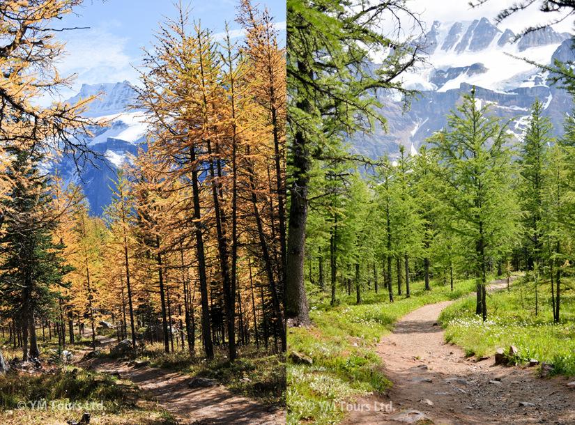 シーズンを通して楽しめる3つのベスト・ハイキングコース_d0112928_07242185.jpg