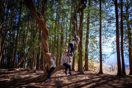 第29回さいたま森林フォトコンテスト 入賞_b0251929_07592970.jpg