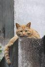 猫的パソに付き合う_e0131930_15184628.jpg