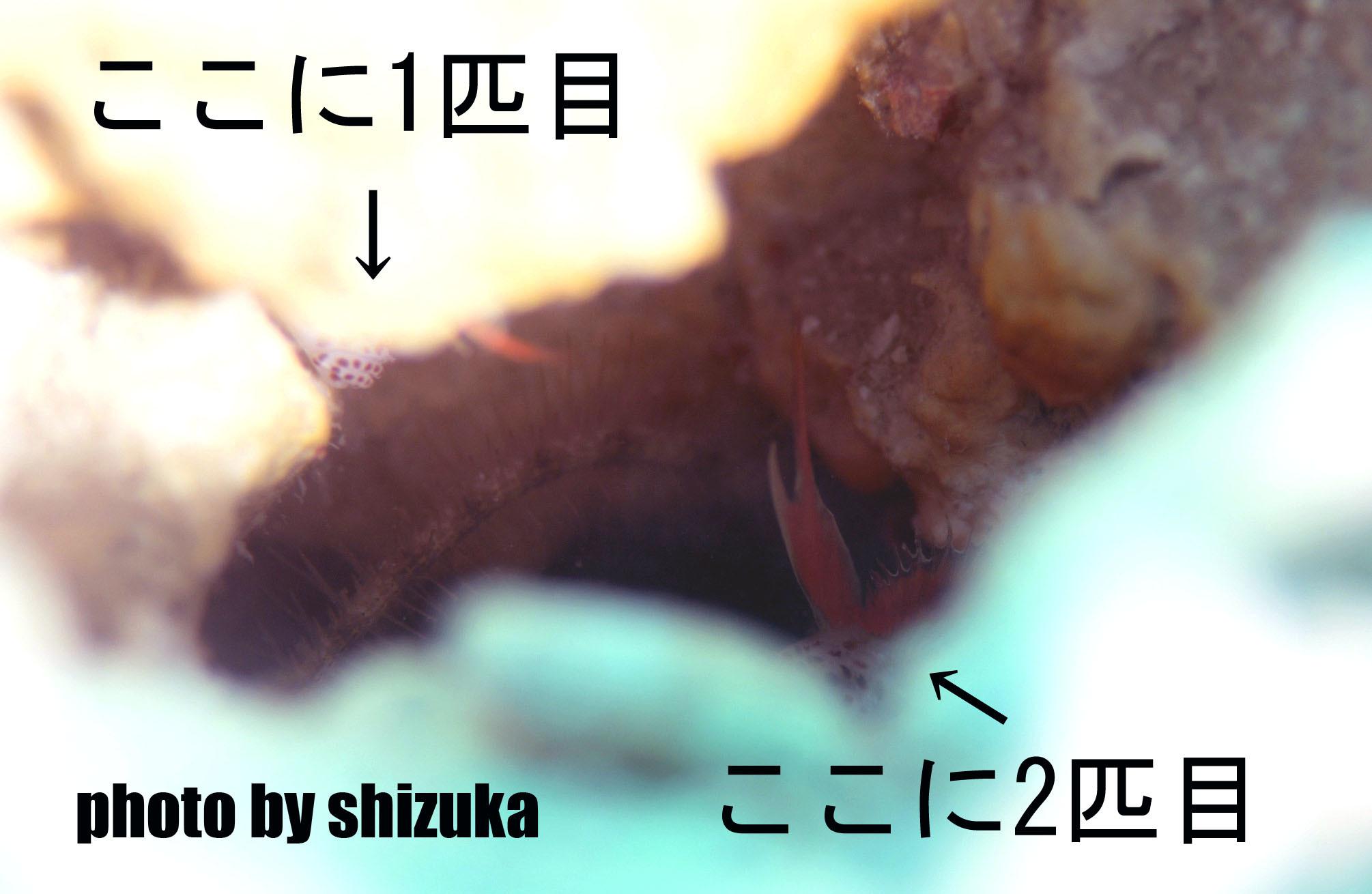 7月6日ホムラハゼ!!コンプリートです!!_c0070933_09114697.jpg