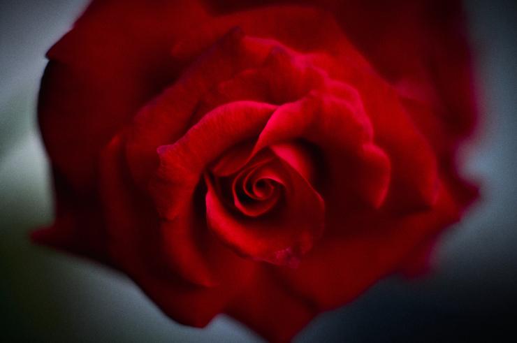 Red(3cut)_e0342136_14110418.jpg