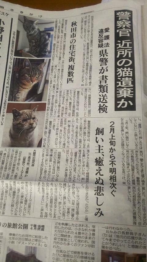 猫を捨てることは犯罪です。_d0073743_18194627.jpg