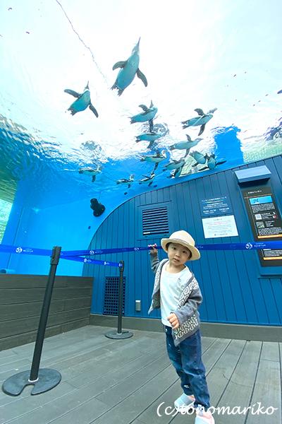 水族館のおさんぽ&明日からの博多「ぼわっと」のお知らせ_c0024345_12354211.jpg