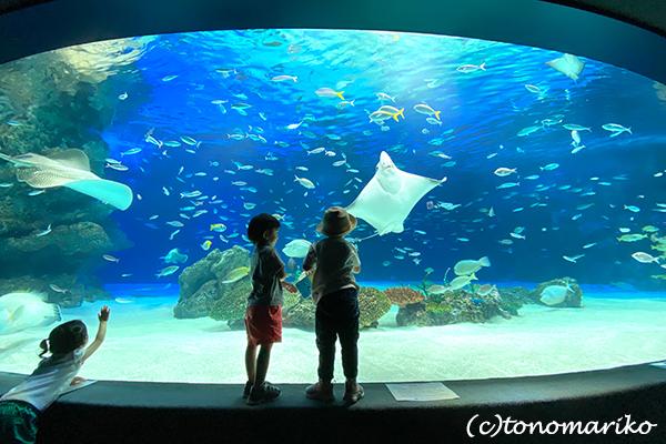 水族館のおさんぽ&明日からの博多「ぼわっと」のお知らせ_c0024345_12354233.jpg